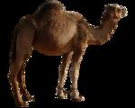 Tabela do Jogo do Bicho - Camelo