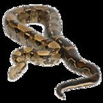 Tabela do Jogo do Bicho - Cobra