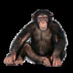 Tabela do Jogo do Bicho - Macaco