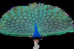 Tabela do Jogo do Bicho - Pavão