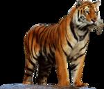 Tabela do Jogo do Bicho - Tigre